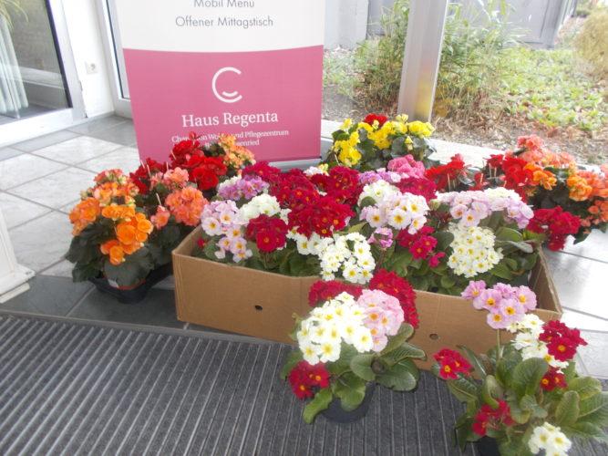 Blumenspende an Haus Regenta